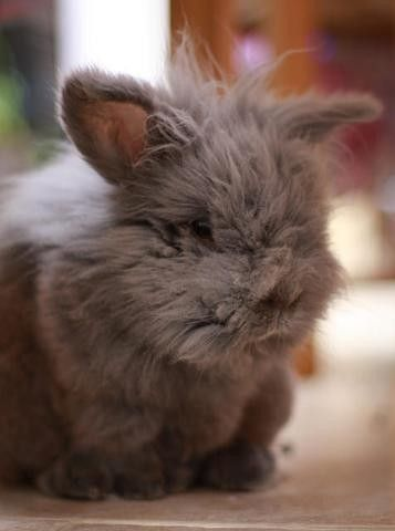 Fuzzy wuzzy silly bunny. Baby rabbit, grey.