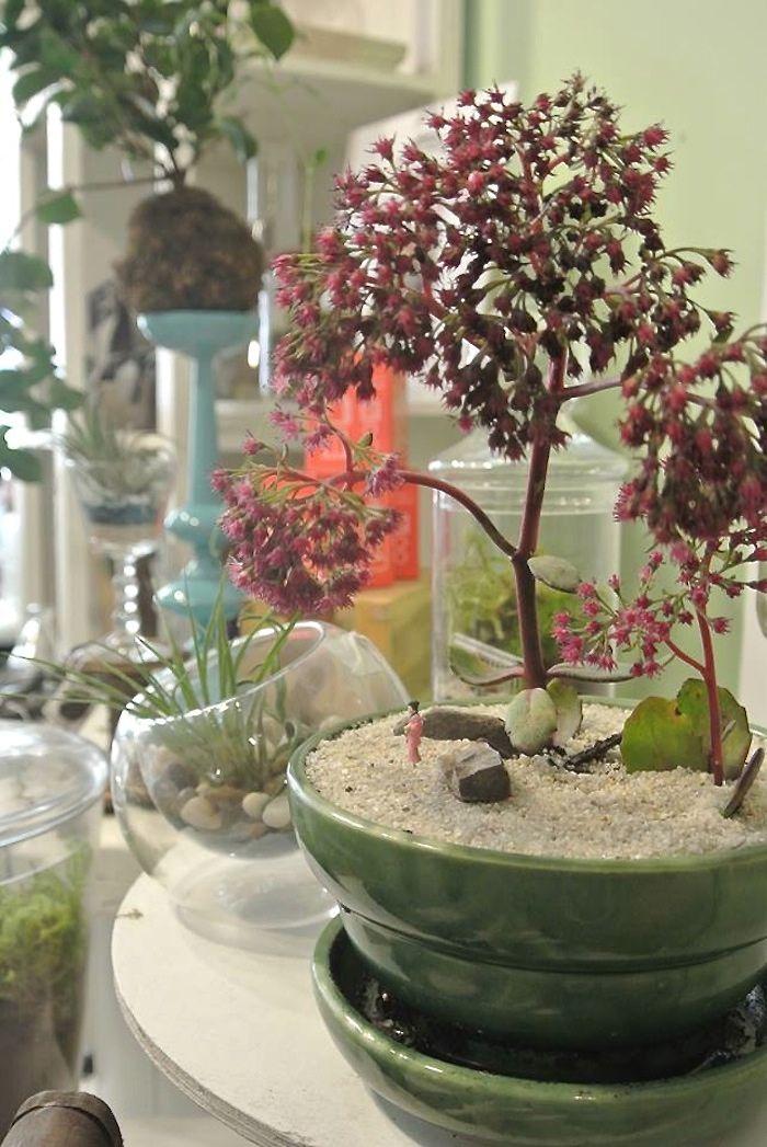 Shopper's Diary: Tiny Worlds Under Glass at Twig Terrariums: Gardenista