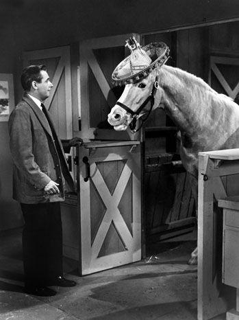 Mr. Ed het sprekende paard, jammer dat deze serie maar kort te zien was op TV Noordzee