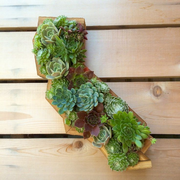 Succulent Wall California 9 X15 Hanging Wall