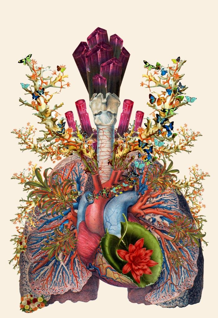 adore anatomical heart lungs collage by bedelgeuse Art Print by Bedelgeuse | Society6