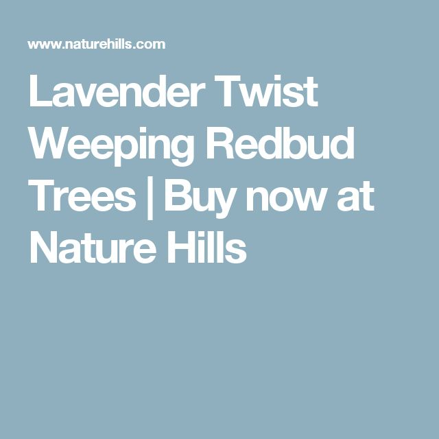 Lavender Twist Weeping Redbud Trees | Buy now at Nature Hills