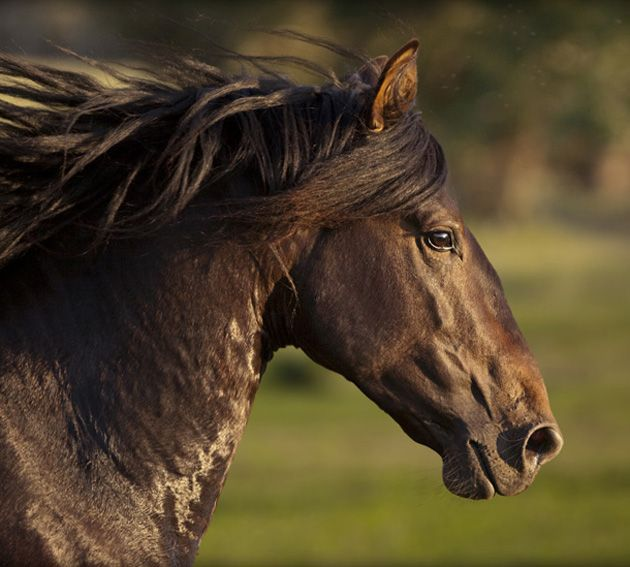 horse horses amazing photographs animals pretty wildlife photographer head animal most beauty wild photographers portraits which