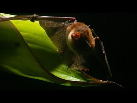 10 Amazing Things You Didn't Know Bats Could Do - Listverse