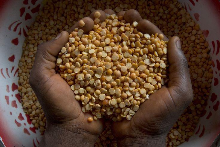 Lentils - Sierra Leone. ©FAO/Peter DiCampo