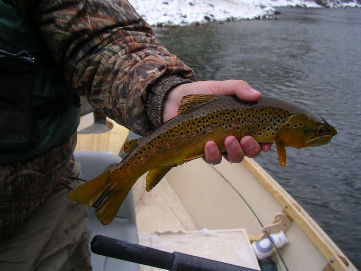 17 best images about green river utah on pinterest for Best fishing in utah