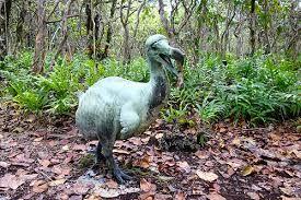 دودو پرنده منقرض شده جزيره موريس