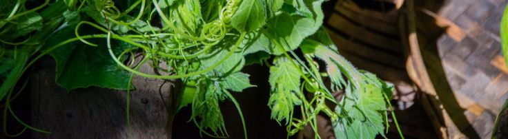 Parfumés – Légumes à l'indienne | Lutsubo