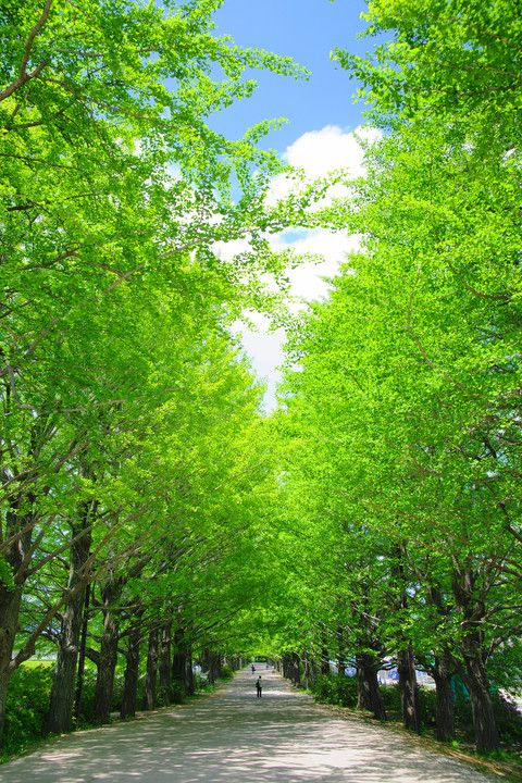 Showa Kinen Park (国営昭和記念公園)
