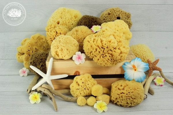 Sea Sponge Tampons?!! Yes, They Exist & This is My Review of Them!