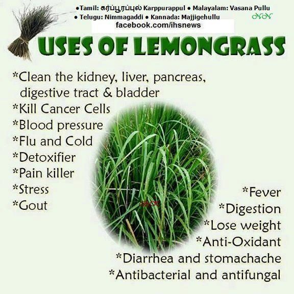 Uses of Lemongrass. Clean the kidney, liver, pancreas, digestive tract & bladder. Kill cancer cells, blood pressure, Flu & cold, Detoxifier, Pain Killer, Stress, Grout, Fever, Digestion, Weight Lose, Diarrhea & stomachache