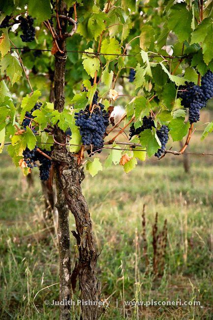 157 Best Images About Grapevine Decor On Pinterest