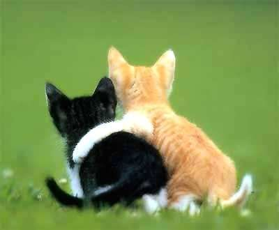 Cats....: Cats, Kitty Cat, Animals, Best Friends, Bestfriends, Friends Forever, Bff, Things, Kittens