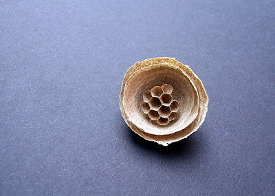 Wasp Nest- beautiful