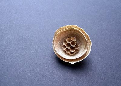 Wasp Nest- beautiful