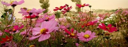 Wild Flower Valley Facebook Covers