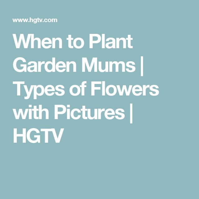 When to Plant Garden Mums | Types of Flowers with Pictures | HGTV