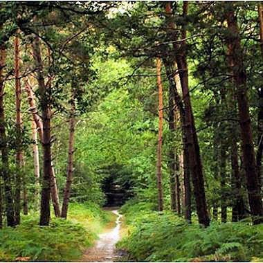 La forêt de Fontainebleau, Fontainebleau, France