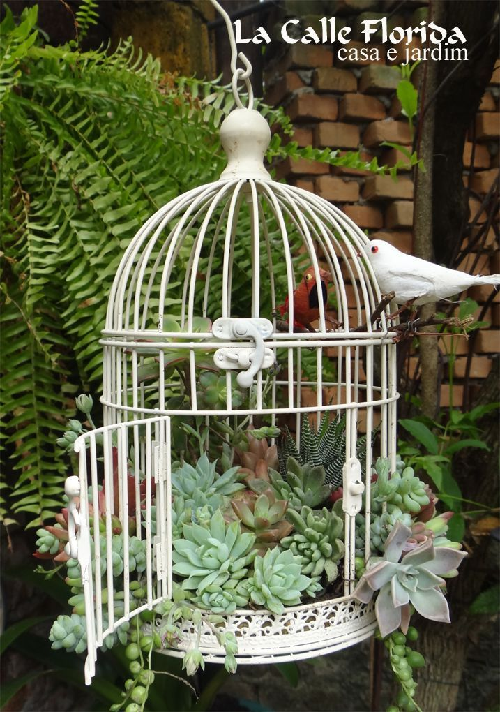 Plant succulents in an old bird cage and hang