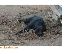 GRAN CANARIA  #Perdido #Encontrado #sebusca #extraviado #LealesOrg  Contacto y info: Pulsar la foto o: https://leales.org/perdidos-o-encontrados/perros-perdidos/gran-canaria_i2630 ℹ  PERDIDA EN TELDE HEMBRA CON CHIP. ES URGENTE. Dueño: Juan Amador Rivero nº tfno. 629449642 Otro nº tfno. : 645792334 Muchas gracias   Acerca de esta publicación:   Esta publicación NO ha sido creada por Leales.org y NO somos responsables de su contenido. Ha sido publicada gratuitamente por un usuario en la…