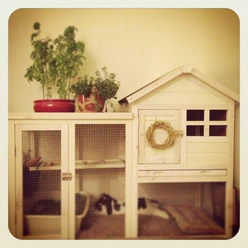 Indoor hutch for our adorable little house bunny. Advantek The Stilt House Rabbit Hutch by Advantekhttp://www.amazon.com/dp/B0087BI9KW/ref=cm_sw_r_udp_awd_O.MKsb0Q4APDF