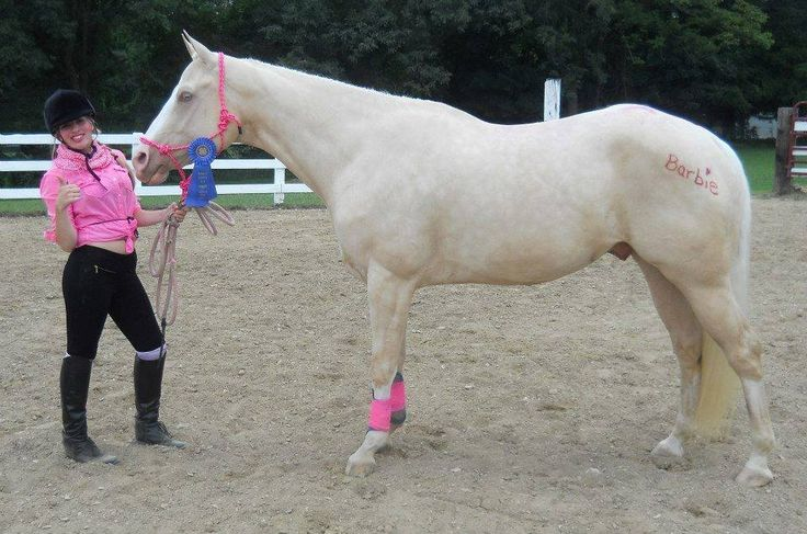 1000+ Images About Halloween Horse Costume Contest On