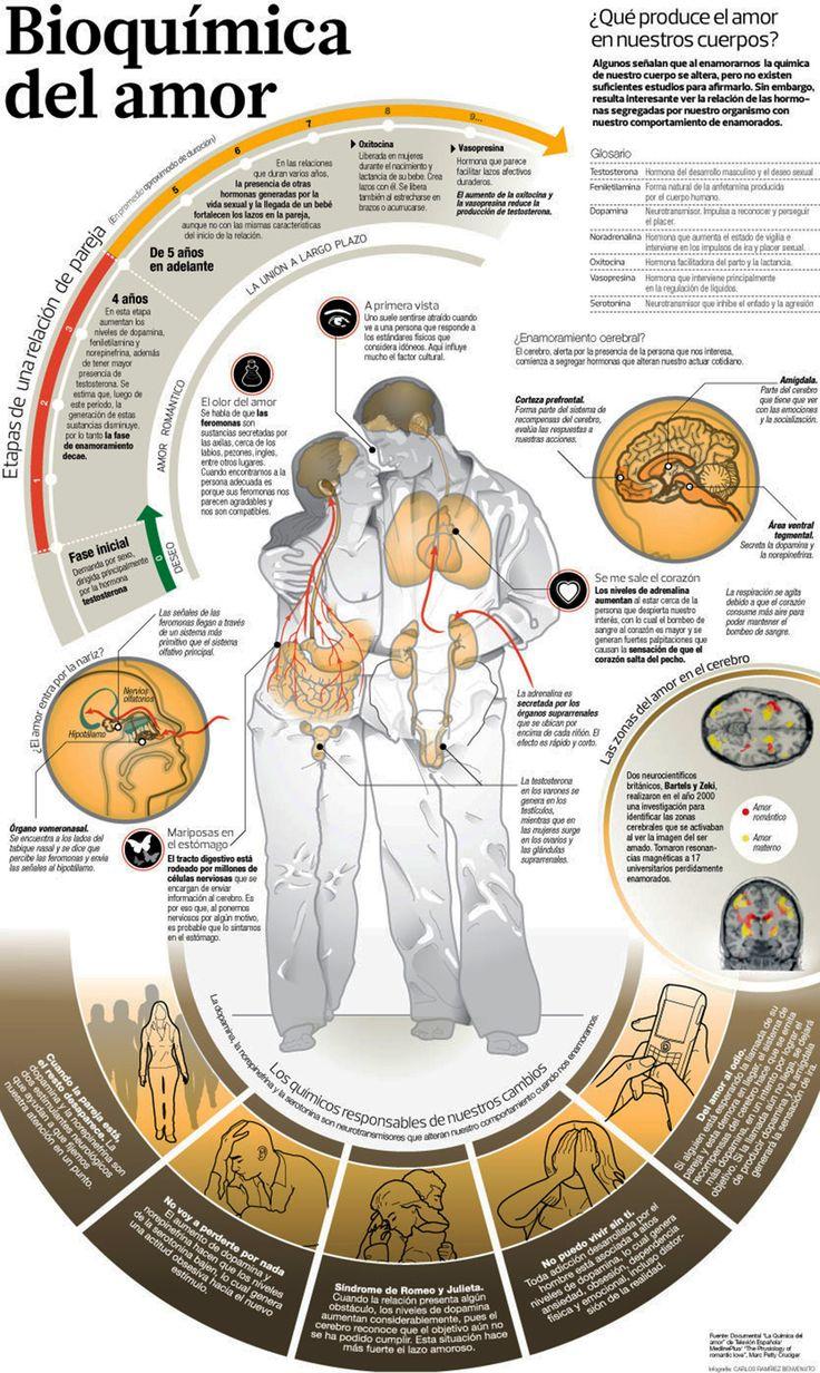 La bioquímica del amor - Investigación y Desarrollo