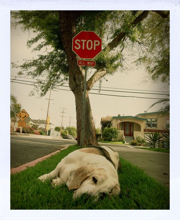"""""""STOP"""".  """"Okay"""".  