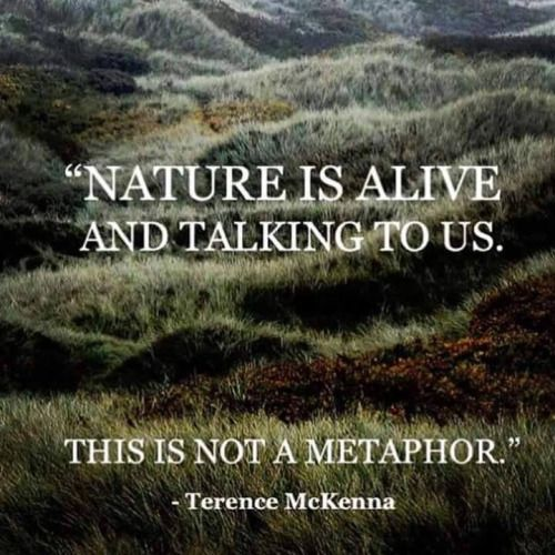 454 Best Images About Solitude In Nature ☽☯☾ On Pinterest
