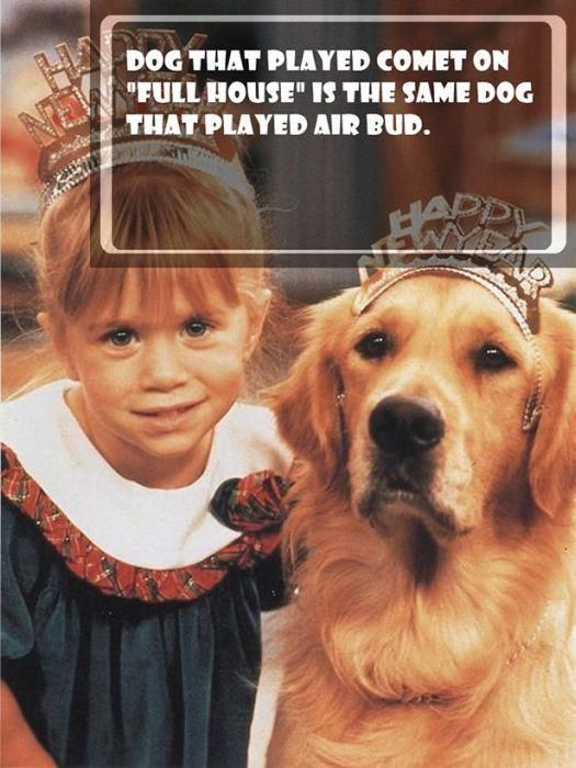 No way!!!!!! Is this really true?? The dog on that played comet on full house is the same dog that played air bud