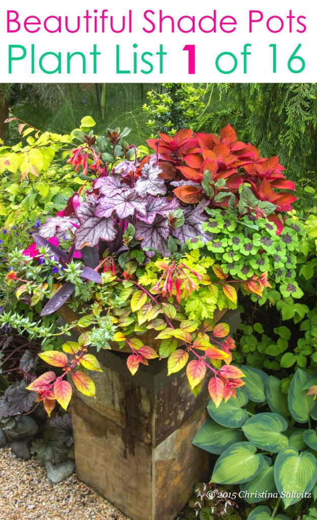 16 Colorful Shade Garden Pots Plant Lists In 2020 Container Garden Design Container Flowers Plants
