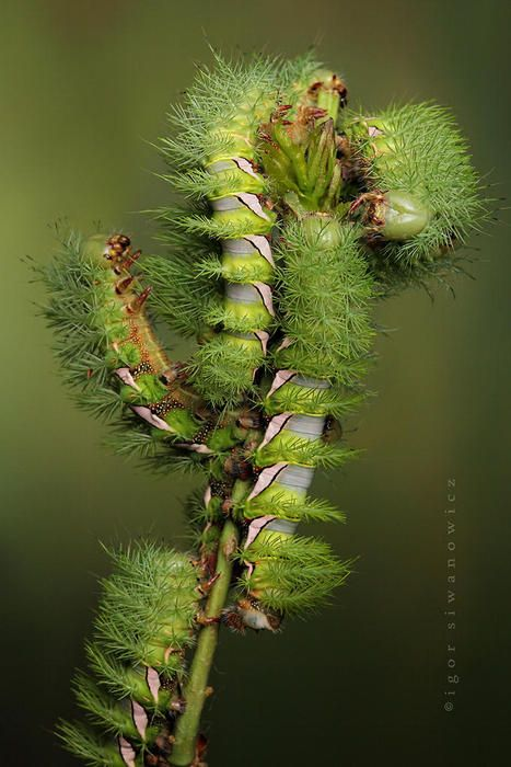 Soft, fuzzy Caterpillars turn into beautiful flying butterflies and moths