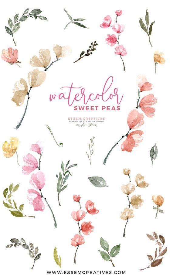 Watercolor Sweet Peas Clipart Floral Invitation Background