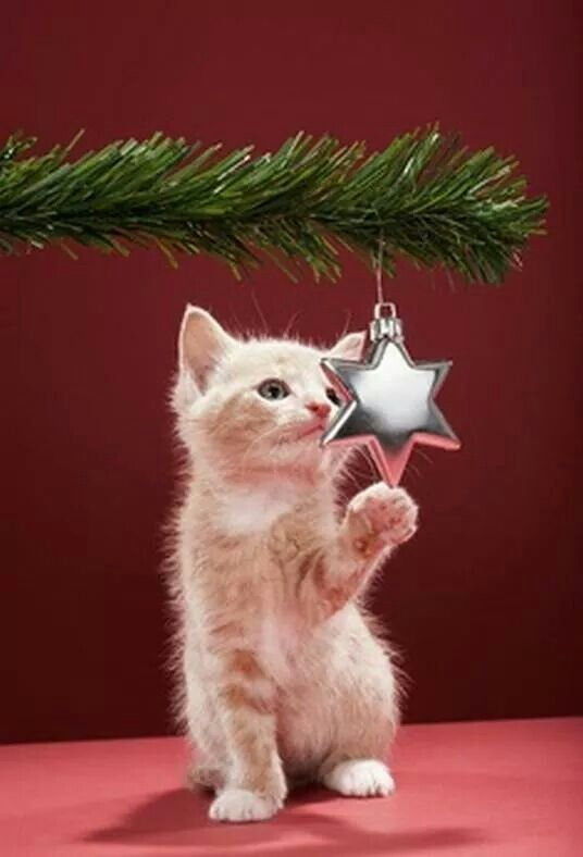 """* * """" Me knowz dis be fer meez. A low branch wif a little star, hows obvious, notz to mention temptin'."""""""