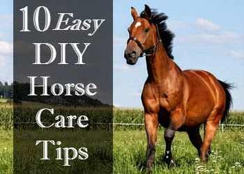When it comes to DIY horse care I'm all for putting in a little blood, sweat (and usually tears) to help save a few bucks. After all horse care is rarely cheap, or easy. Luckily, I've put together 10 great ideas that are the exception to the rule!