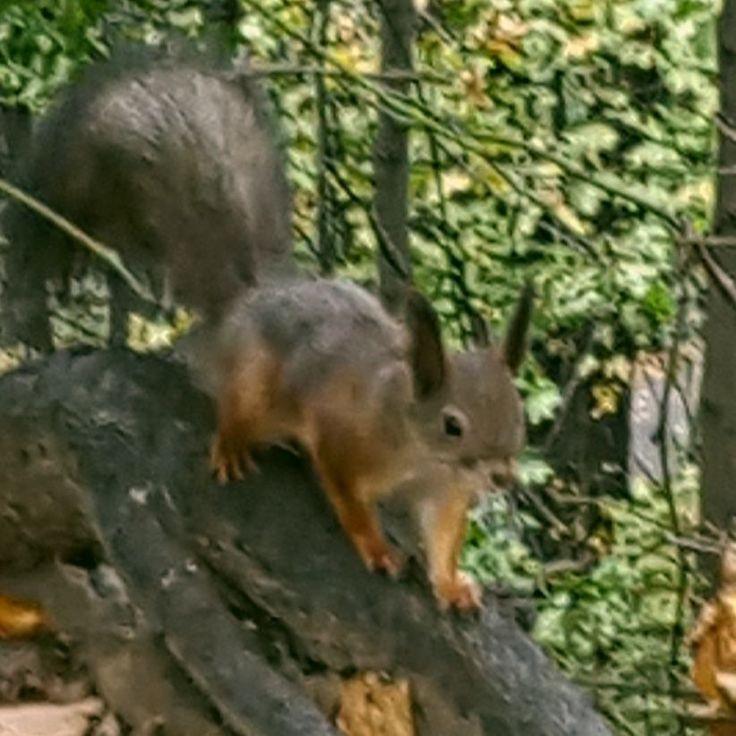 #белка #воробьевыгоры #паркимосквы #moscowpark #moscow #squirrel #vorobyovygory