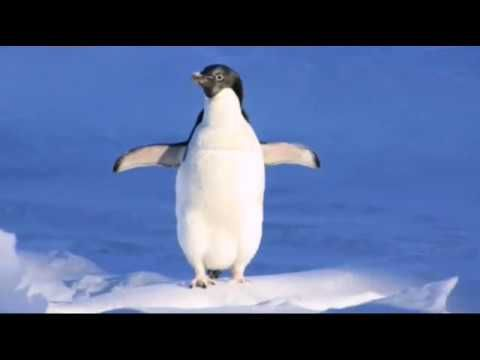 Penguin Wallpaper is the best selection pictures of Penguin for your smartphone.