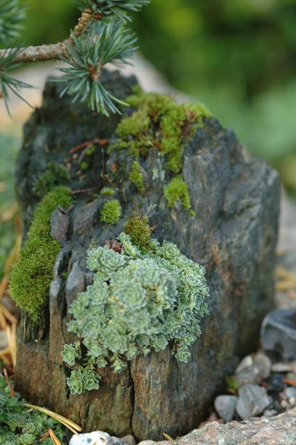 Rock with moss and succulents! Our new backyard is filled with succulents!
