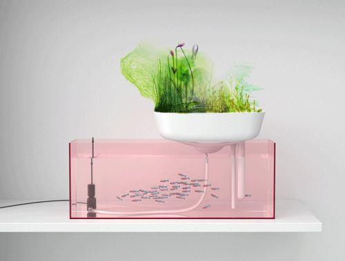 Floating garden by Benjamin Graindorge & Duende Studio #designwithfish