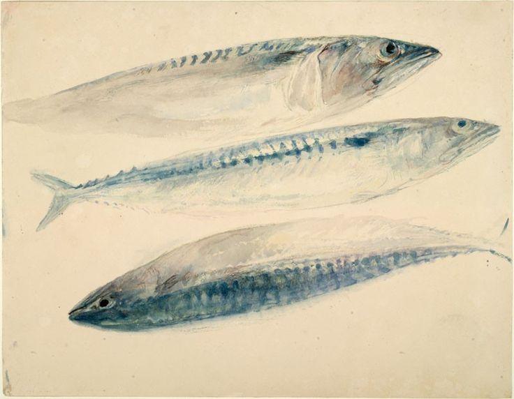 J. W. Turner, c.1835 - 1840.  Sketch of Mackerel.