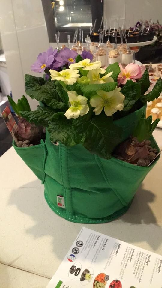 Mini Erbario di Tasca - Fresh Green