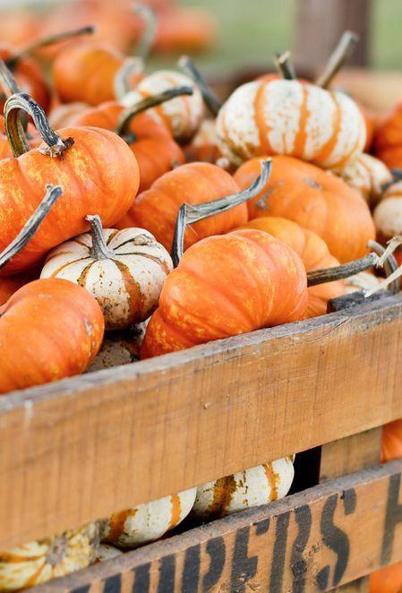 Autumn beauty ♥ pumpkin love