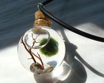 New Zen. Garden. Stone Top. Air Plant. Marimo Ball. by MyZen