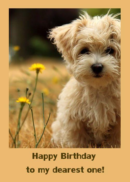Cute Birthday Card With Puppy Cujo Teddy Bear Dog