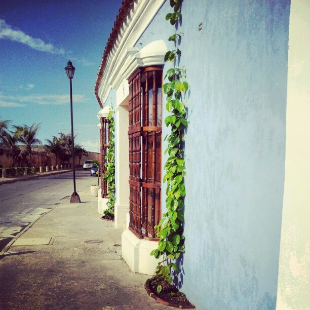 Beautiful Cartagena and its plants on the wall (vertical gardens)