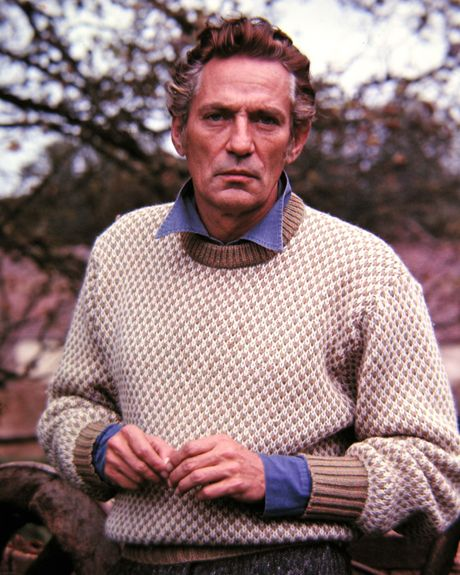 photographs of peter finch in 1976 - Google Search