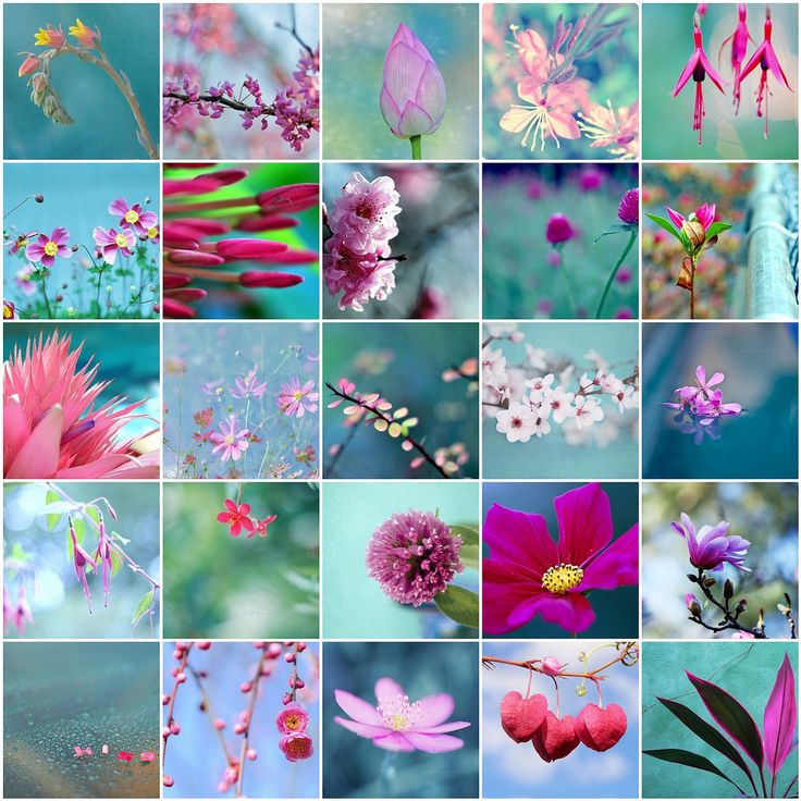 Pink and blue celebration of spring !   Flickr - Photo Sharing!