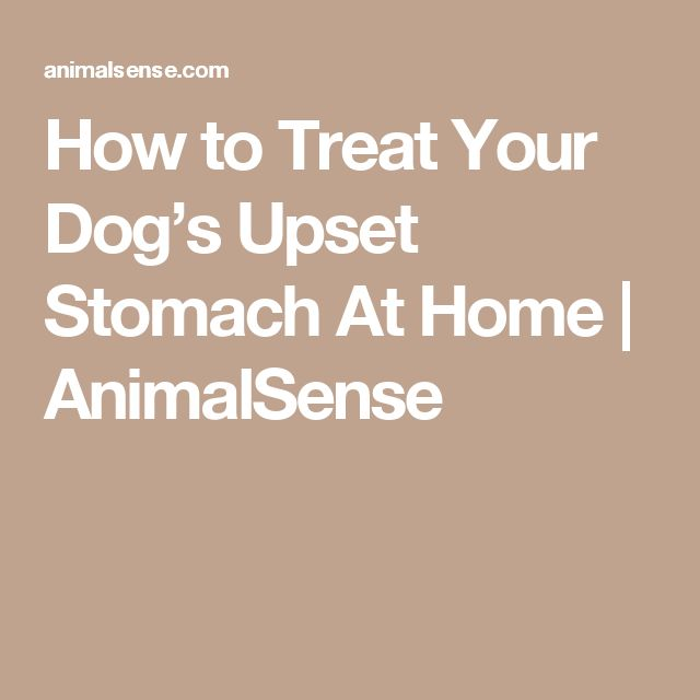 How to Treat Your Dog's Upset Stomach At Home | AnimalSense