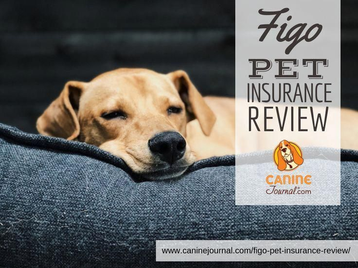 Figo Pet Insurance Review Is It The Best Value In 2020 Pet