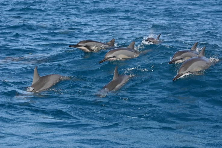 Swim with the #dolphins #Mauritius — About Mauritius | Mauritius Attractions